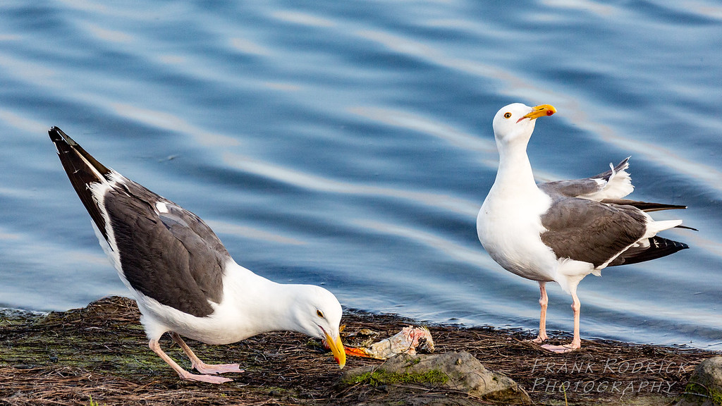 Birds0622-1388