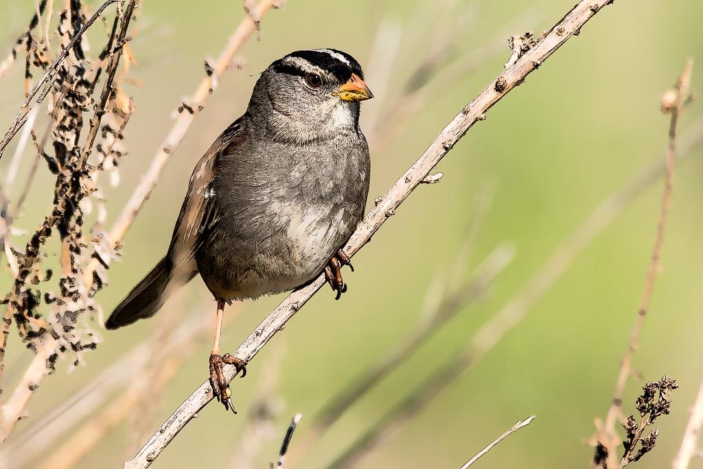 BirdsFI0129-211-toon