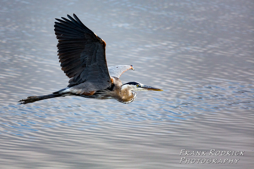 Birds0622-1216
