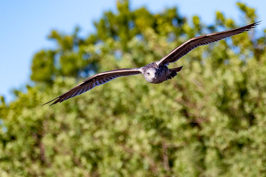 Birds0417-386