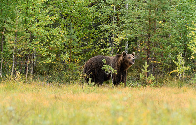 Same bear
