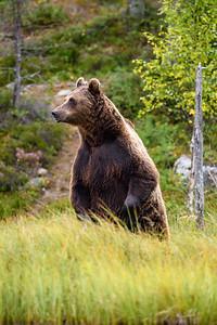A very tall bear
