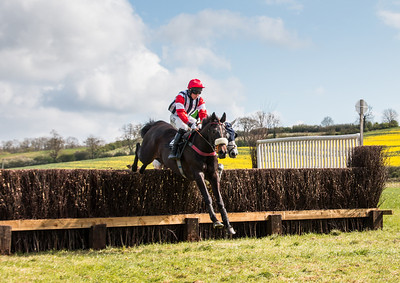Woodland Pytchley Point to Point - Dingley Easter 2014