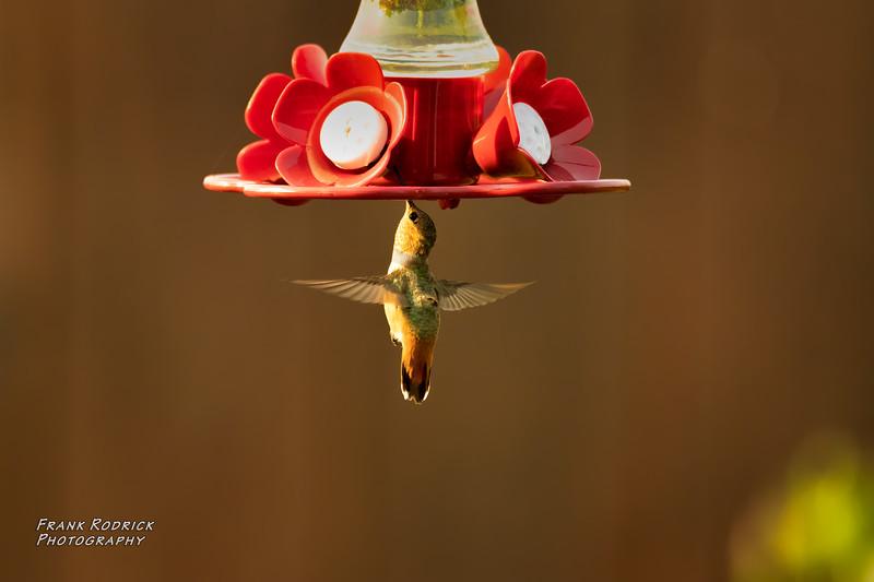 BirdsBackyard0820-4