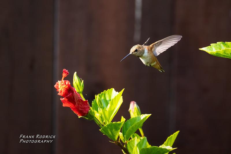 BirdsBackyard-144