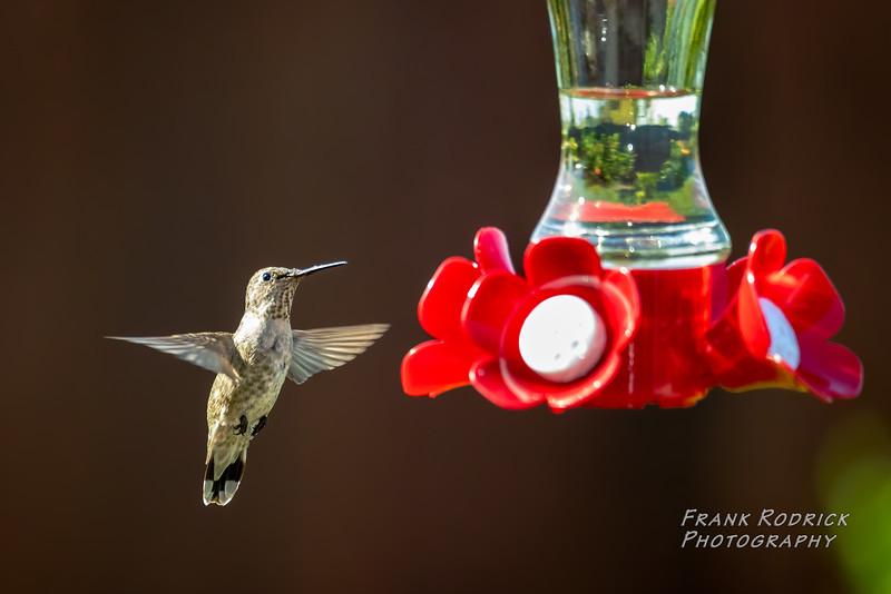 BirdsBY0823-8