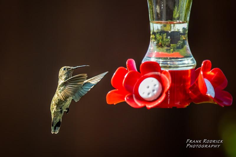BirdsBY0823-7