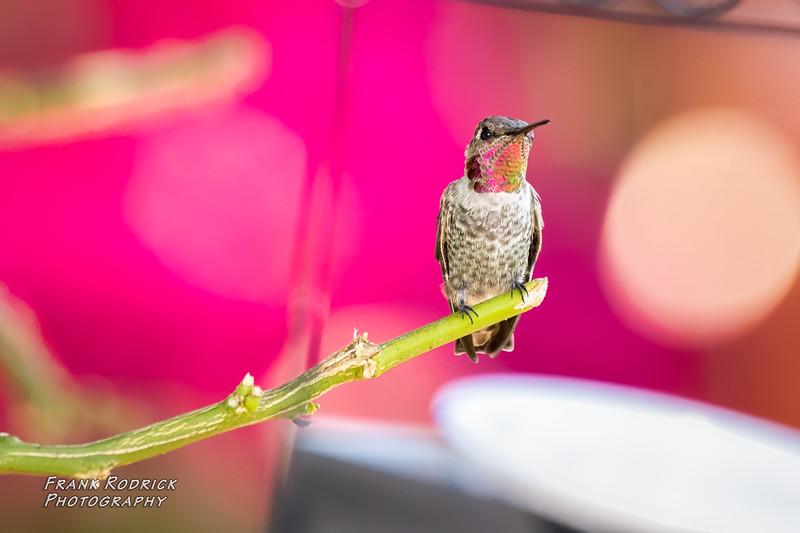 BirdsBY0822-29