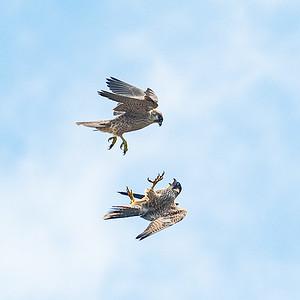 Talon clasping