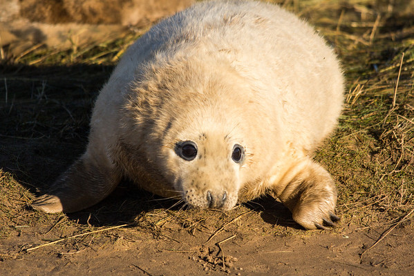 Donna Nook Seal Colony