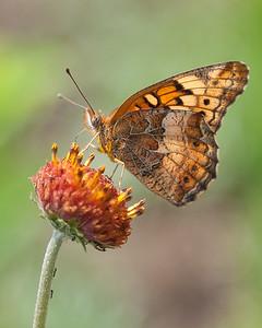 Butterfly's Fort Sill Okl