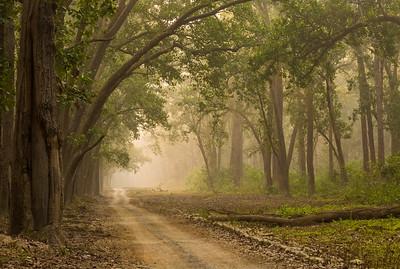 #13 Forest of Corbett National Park
