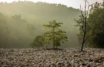 #11 Morning Light, Corbett National Park