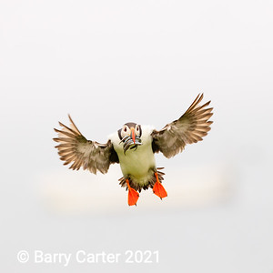 Puffin on Succesful Mission