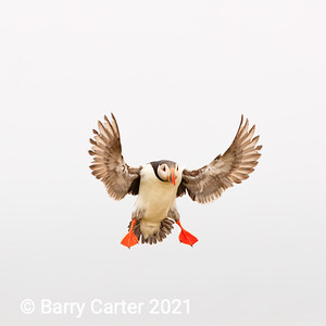 Puffin in Space