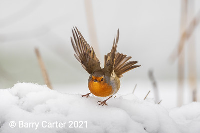 Robin Makes a Crash Landing