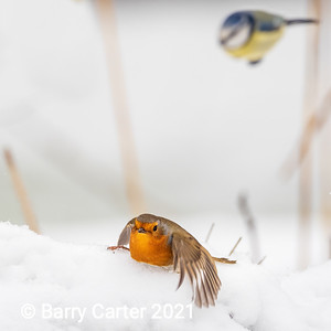 Legless Robin gets Photobombed