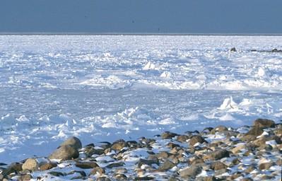 tundra in Churchill