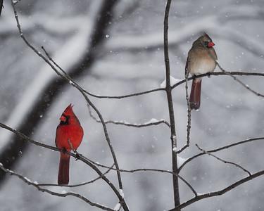 Jester Park Cardinals