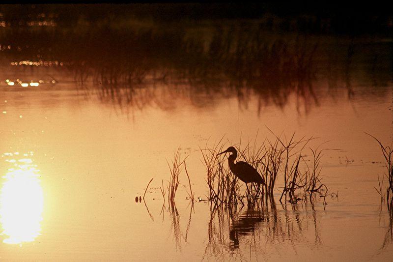 Sunrise, Loxahatchee National Wildlife Refuge, Florida