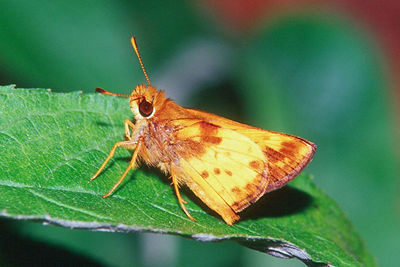 Zabulon Skipper, male - Pittsburgh, Pennsylvania