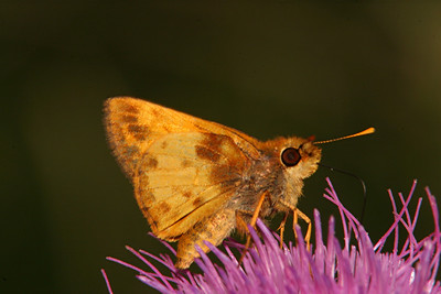 Zabulon Skipper, male - South Park, Pennsylvania