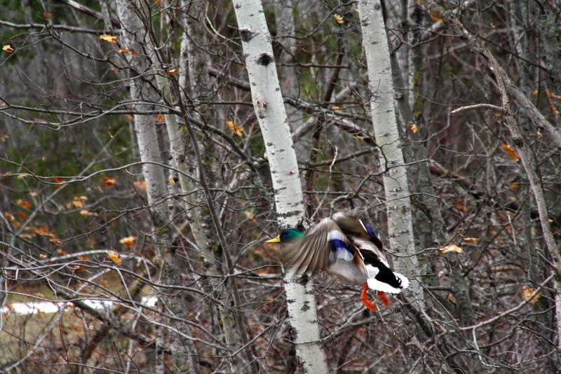 "In a New Light: Wildlife Safari - Dakota - ""Alone"""