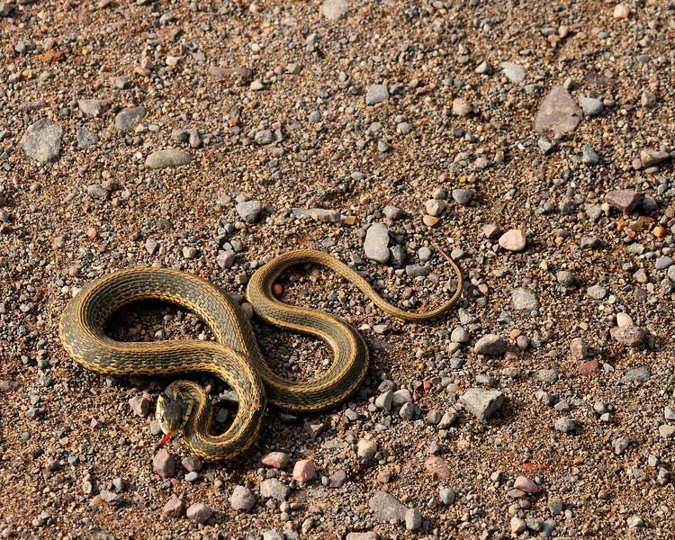 """The Snake"" by Christian  |  Wildlife Safari"