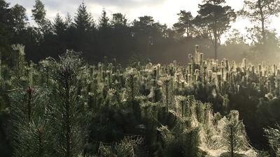 #bosbeheer #duurzaamheid #PSC #hout #productiebos Bosontginning Timber technology  #Forestry #Fortstwirtschaft #duurzamebosbouw #sylviculturedurable #NachhaltigeForststwirtschaft #forêts #economics #ecology  Horticulture, Algemene Boomwerken   #storytelling #TEAMMAPITO - WHO ELSE
