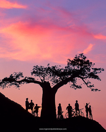 Strong, graphic shapes and clouds make this sunset shot of mountain bikers at Rhodes' Baobab at Mashatu Game Reserve in Botswana.