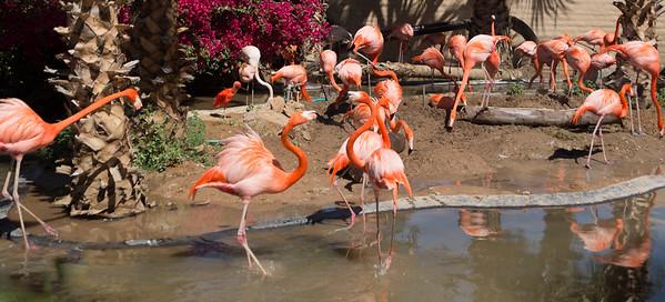 Wildlife World Zoo  March 12 2016 004