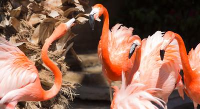 Wildlife World Zoo  March 12 2016 002