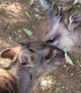 Wildlife World Zoo  March 12 2016 022