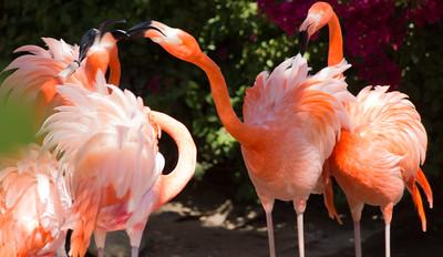 Wildlife World Zoo  March 12 2016 001