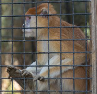 Wildlife World Zoo  March 12 2016 023