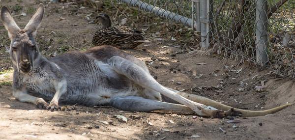 Wildlife World Zoo  March 12 2016 008