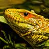 Wildlife World Zoo  March 12 2016 049