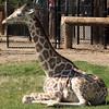 Wildlife World Zoo  March 12 2016 043