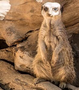Wildlife World Zoo  March 12 2016 017