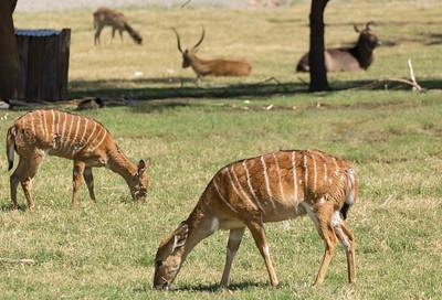 Wildlife World Zoo  March 12 2016 024