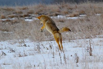 Wildlife activity slideshows
