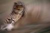 Running Cheetah
