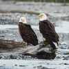 Eagle Pair, Alaska