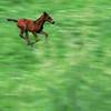 Running Colt
