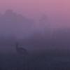 Antelope in the Mist