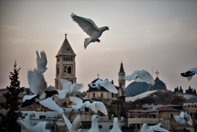 Doves in Jerusalem