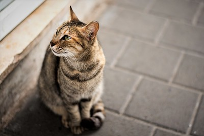 Cat on street of Tel Aviv
