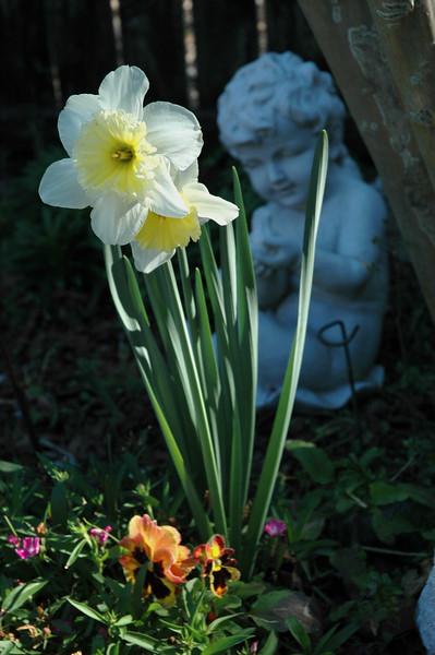 Daffodil and Cherub