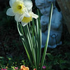 Daffodil and Cherub