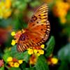 Coastal Butterfly